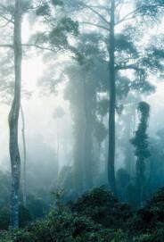 Danum Valley-1, Borneo, 2008, Ditone Print, 225 x 155 cm, Kunstsammlung Nordrhein-Westfalen, Düsseldorf