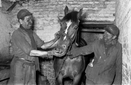 Grubenpferd auf Zeche Zollverein, Essen, um 1957