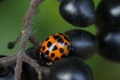 Natur auf Zollverein: Käfer