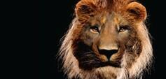 Löwe, Mammut und Co. - Eiszeitsafari